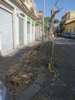 ROMA Via Sangemini, si taglia un albero ma non lo si porta via
